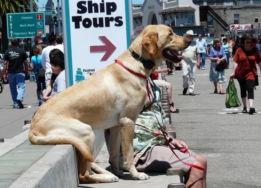 перевозка животных на автобусе