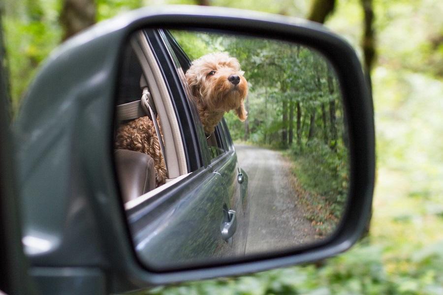 перевозка животных на автомобиле