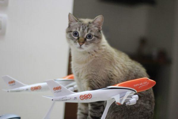 перевозка животных на самолете