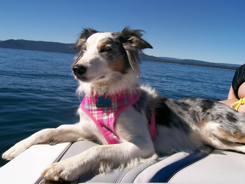 перевозка животных на корабле