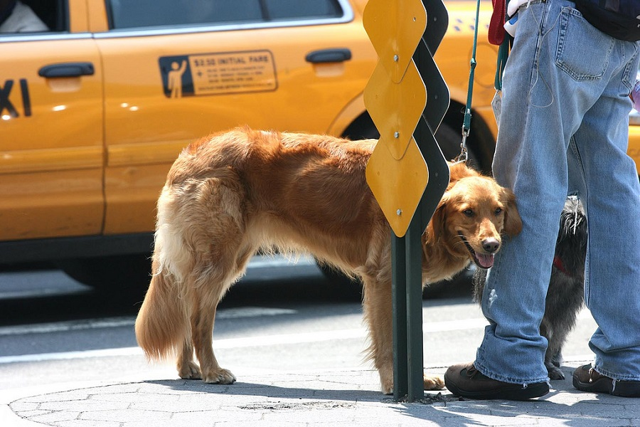 перевозка животных на такси
