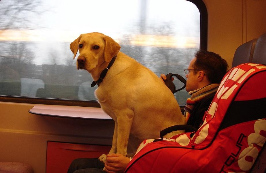перевозка животных на поезде