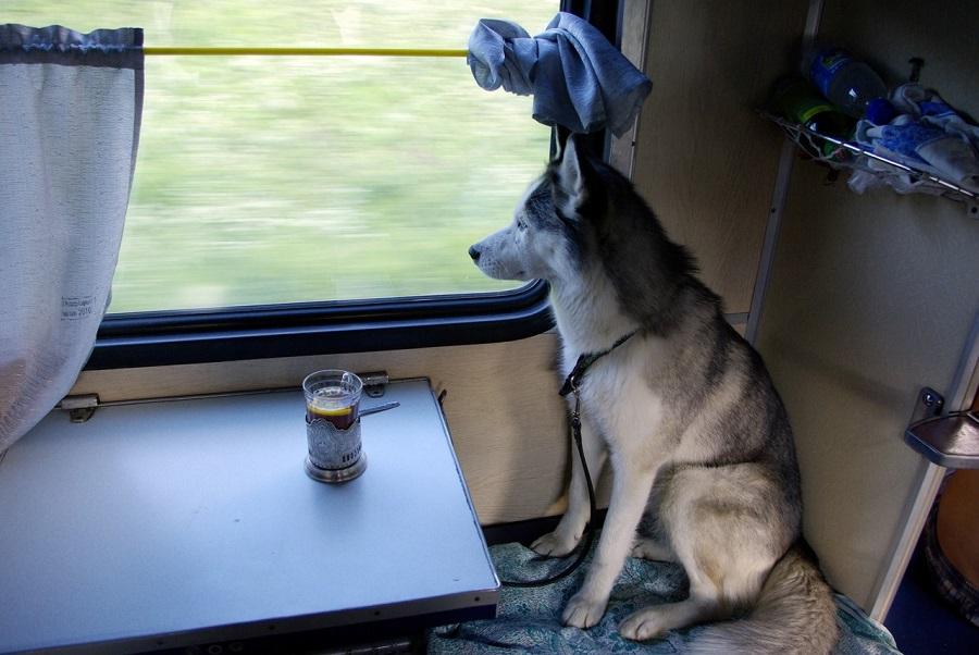 провоз собак в поезде