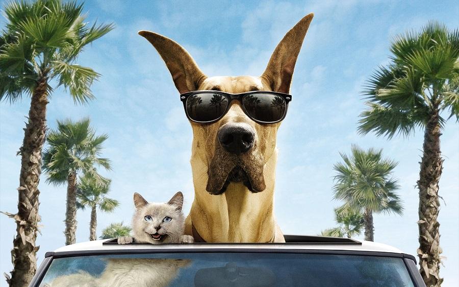 перевозка животных на машине