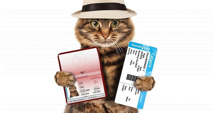 документы для перевозки животных