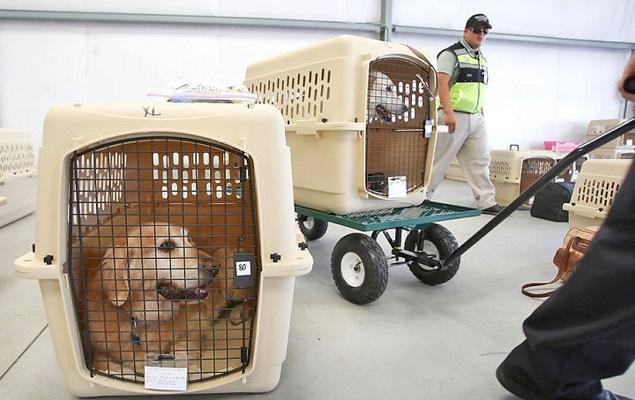 перевозка животных в багажном отделении