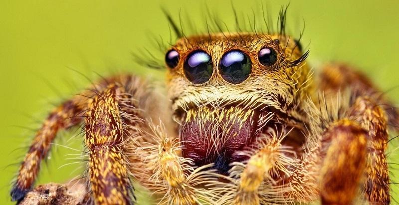 Перевозка пауков и тараканов