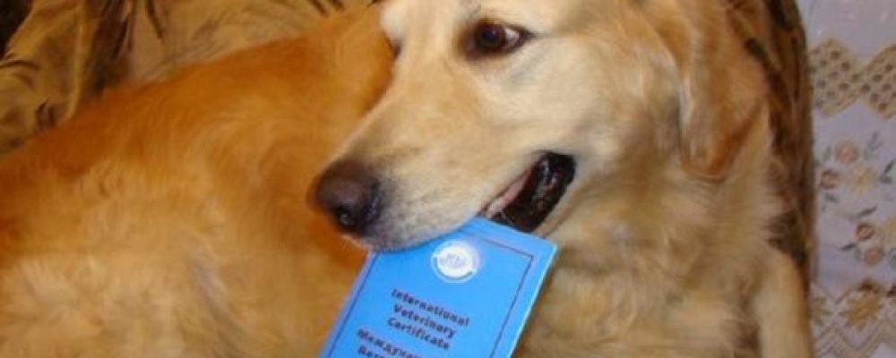 Ветеринарный паспорт животного