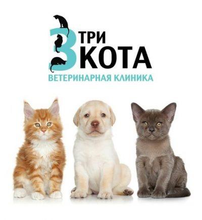 Veterinary clinic Three cats