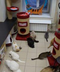 Республика кошек