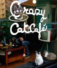 Crazy Cat Cafe