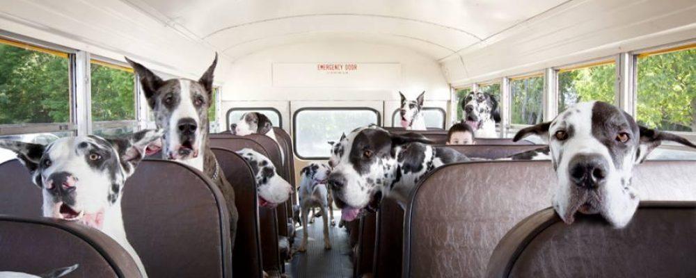 Перевозка животных в общественном транспорте