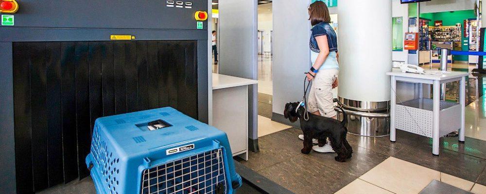 Как перевозят животных в самолете в багаже