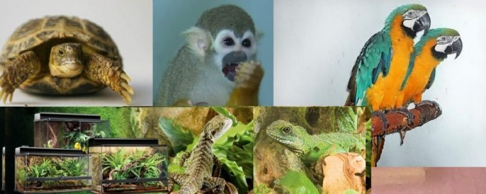 Перевозка экзотических животных