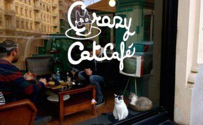 Crazy Cat Cafe