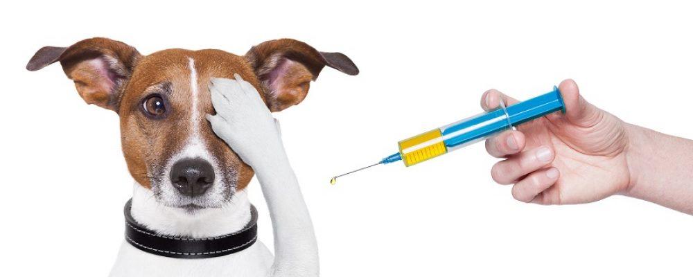 Прививка от бешенства кошкам и собакам